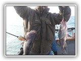 Double on Rockfish